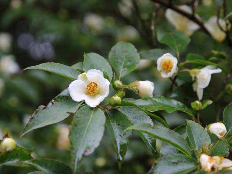 High Beeches Garden Interview