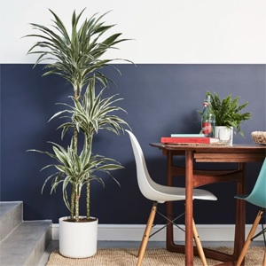 Interior Decorating with Plants