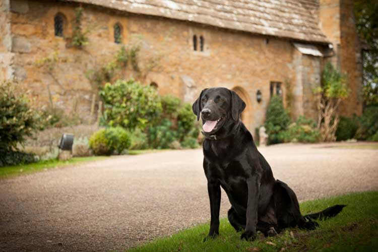 Dog Friendly Hotels UK
