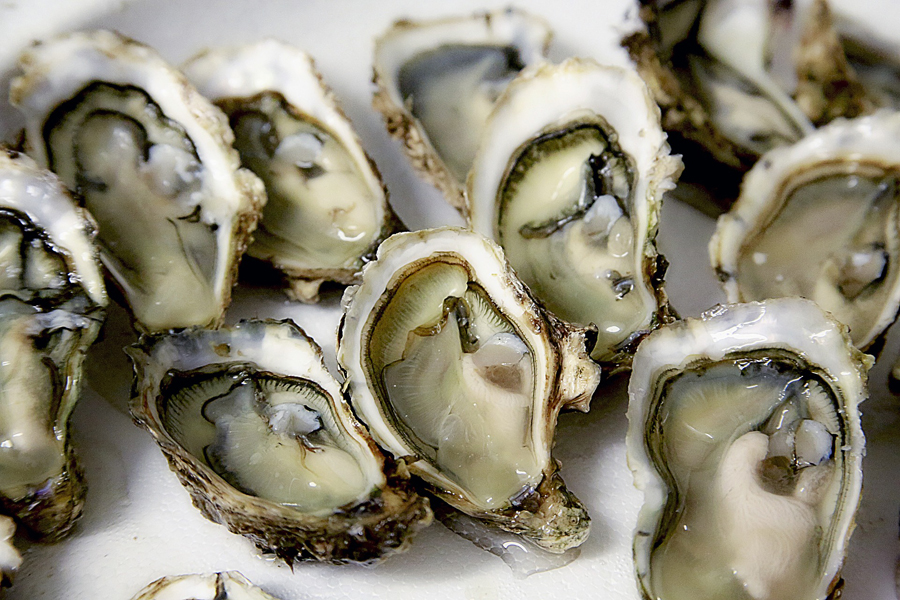 Galway Oyster & Seafood Festival