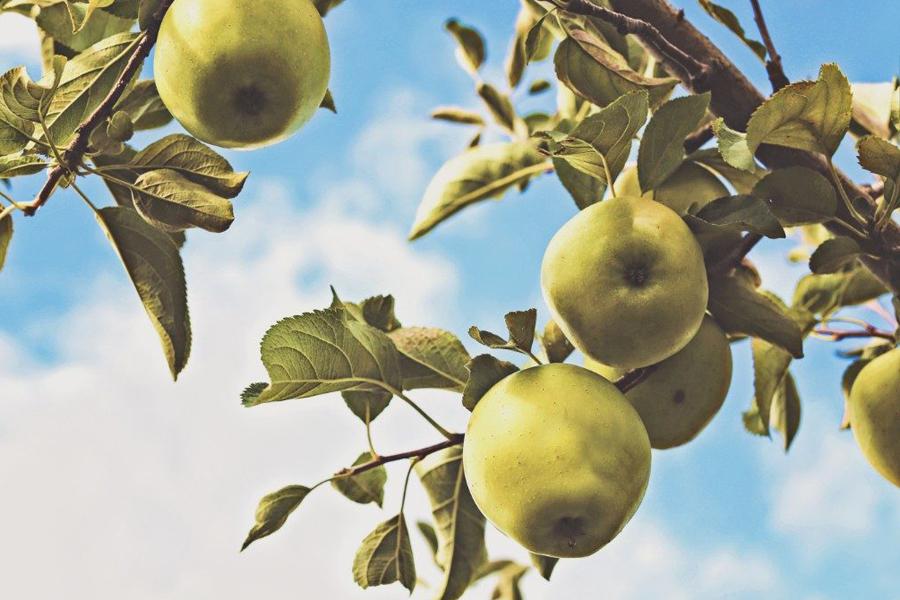 Apple Day, Brighton