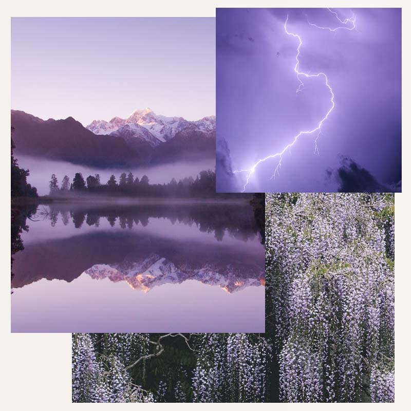 Lilac Inspiration Collage