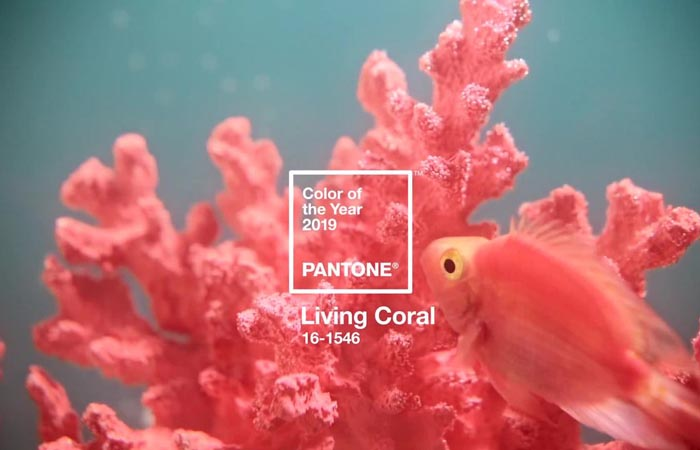 Coral Home Decor